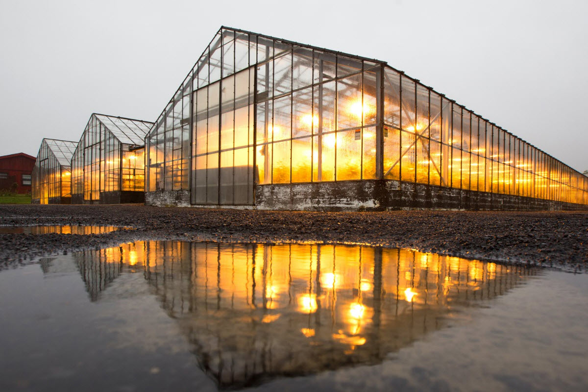Hveragerði is famous for it's Greenhouses