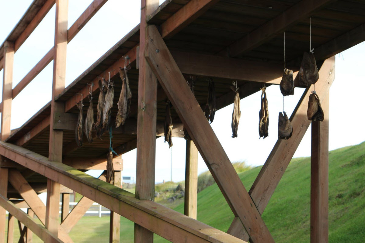 Dry fish on the boardwalk by the shore in Eyrarbakki