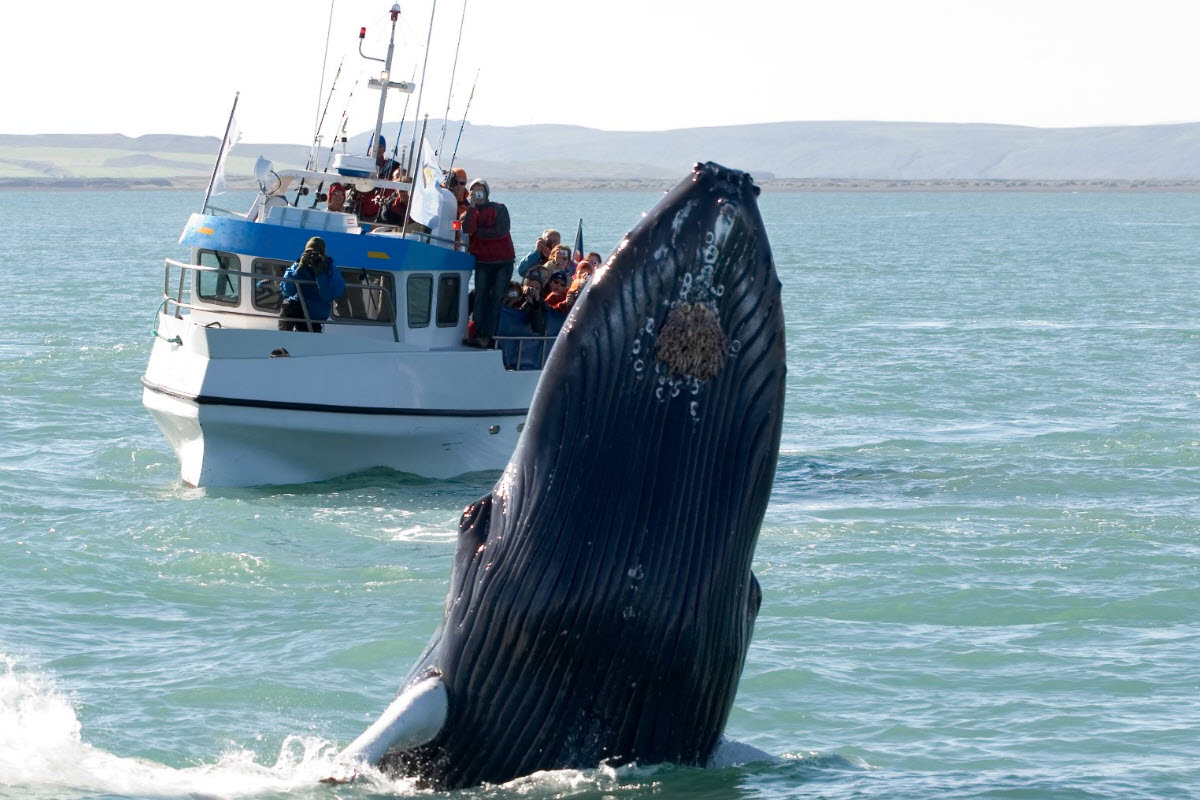 Húsavík is best known for whale watching and is the center of whale watching in Iceland